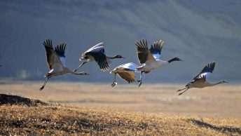 Birding and Nature Tour