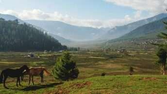 Explore the splendor Phobjikha valley